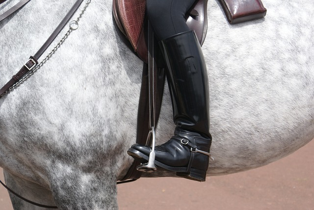 horse-241957_640