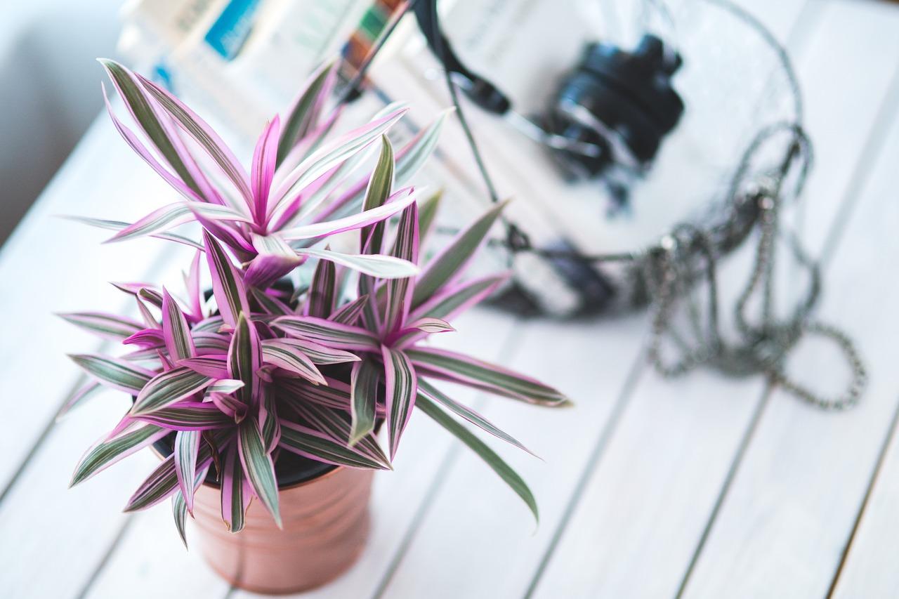 plant-791052_1280