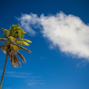 palmtree-35mm-coqueiro