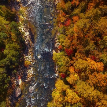 aerial-shot-autumn-autumn-colors-1559708