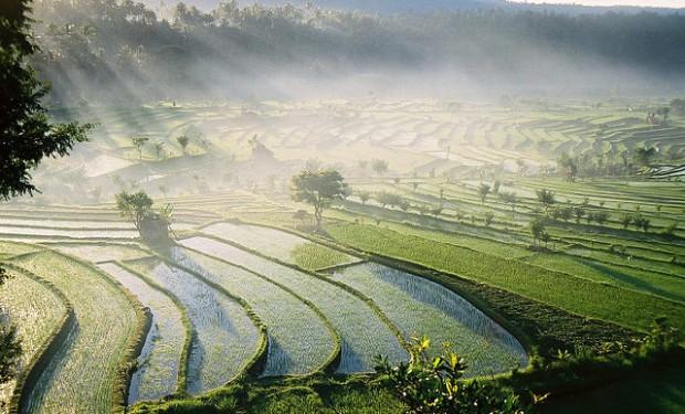 Bali_620